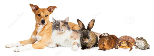 animales-domesticos-1