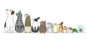 animales-domesticos-10
