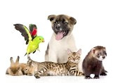 animales-domesticos-9