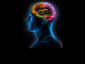 cerebro-biodescodificacion