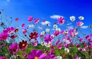 flores silvestres (15)