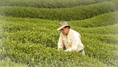 gary-young-campos-cultivo