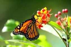 119111879.0YNyy46v.monarch2 (1)