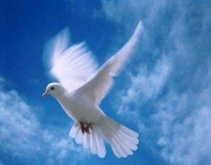 paloma-de-la-paz-1