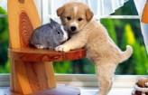 animales-domesticos-1-390x250